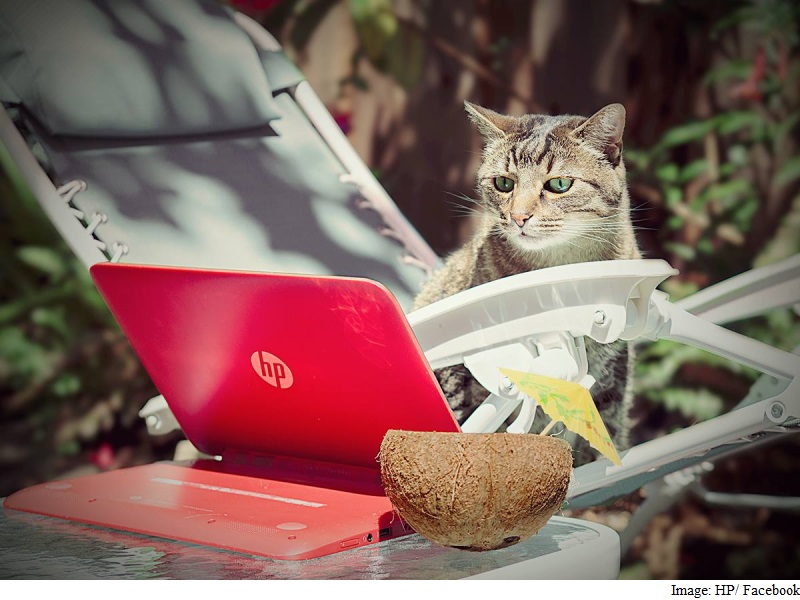 cat_hp_fb